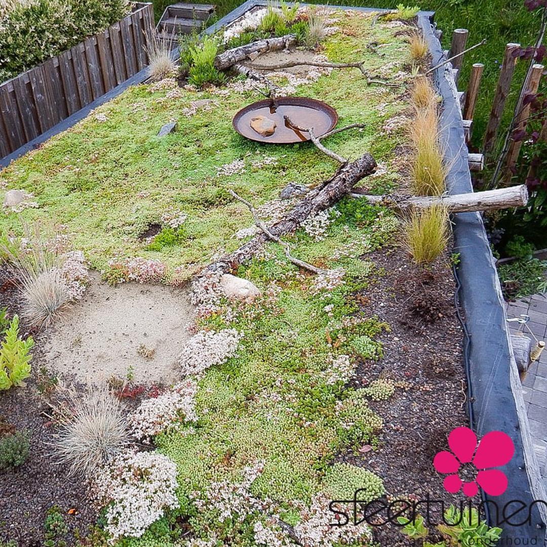 Duurzaam tuinieren: een groen dak met Sedum